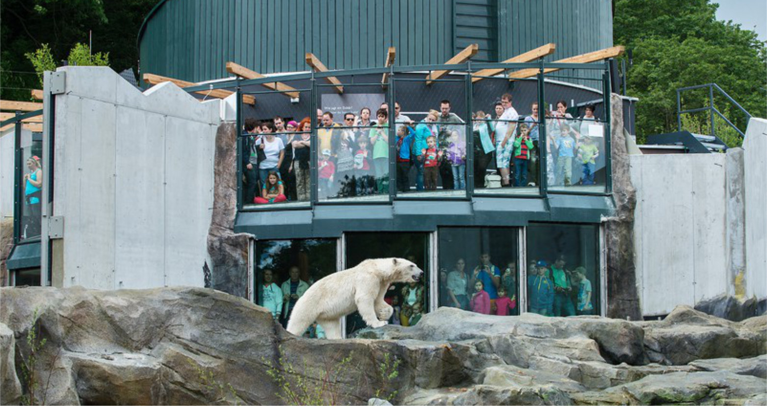Eisbärengehege